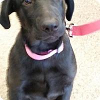 Adopt A Pet :: Pink - San Diego, CA