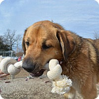 Adopt A Pet :: Josie - Grinnell, IA