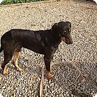 Adopt A Pet :: Sammy - Orange Cove, CA