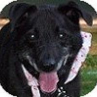 Adopt A Pet :: Leige - Hamilton, ON