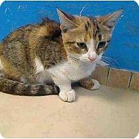Adopt A Pet :: Mandy - Oxford, NY