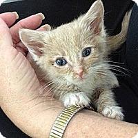 Adopt A Pet :: Benjamin - Island Park, NY