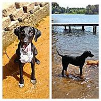 Adopt A Pet :: MARLEY - Austin, TX