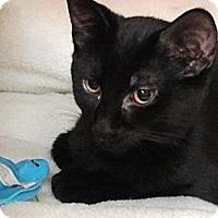 Adopt A Pet :: Fred (KL) - Little Falls, NJ