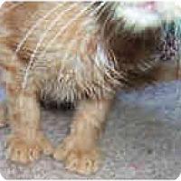 Adopt A Pet :: Macintosh - Dallas, TX