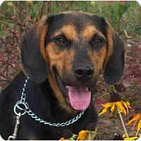 Adopt A Pet :: Bruno (Courtesy) - Indianapolis, IN