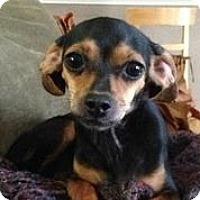 Adopt A Pet :: Minnie - Austin, TX