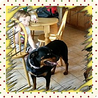 Adopt A Pet :: Azula - Gilbert, AZ