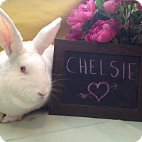 Adopt A Pet :: Chelsie - Columbus, OH