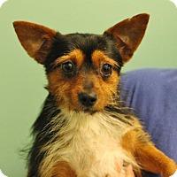 Adopt A Pet :: Mayday - Smyrna, GA