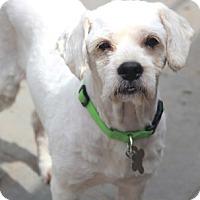 Adopt A Pet :: Ajax - Norwalk, CT