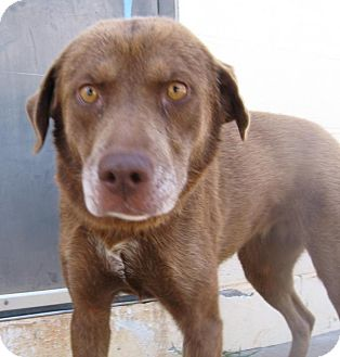 Dogs For Adoption In Stillwater Oklahoma