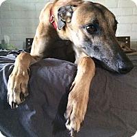 Adopt A Pet :: SkyTrain - Tucson, AZ