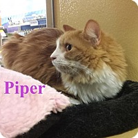 Adopt A Pet :: Piper - Los Angeles, CA