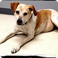 Adopt A Pet :: Copper - Johnson City, TX
