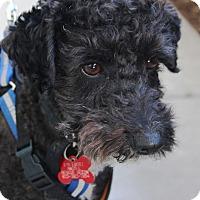 Adopt A Pet :: Mutt - Oakley, CA
