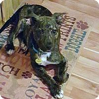 Adopt A Pet :: Phillip - Kimberton, PA