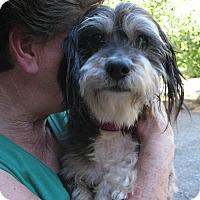 Adopt A Pet :: Junior - Salem, OR