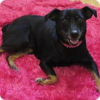 Adopt A Pet :: Charlotte - High Point, NC