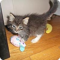 Adopt A Pet :: Morrigan - Livonia, MI