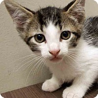 Adopt A Pet :: ADOPTED!!!   Luther - Downers Grove, IL
