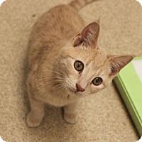 Adopt A Pet :: Re-Purr - Naperville, IL