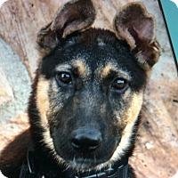 Adopt A Pet :: PAIGE VON PRINZESSIN - Los Angeles, CA