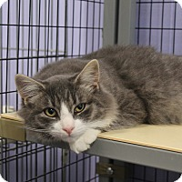 Adopt A Pet :: Cody - Flemington, NJ