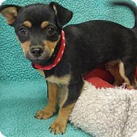 Adopt A Pet :: Jackson - Quail Valley, CA