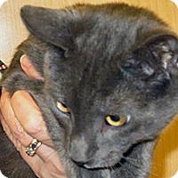 Adopt A Pet :: Pismo - Wildomar, CA