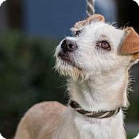 Adopt A Pet :: Blyth - San Diego, CA
