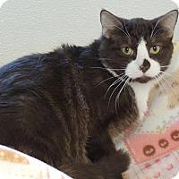 Adopt A Pet :: Cinnamon - Joplin, MO