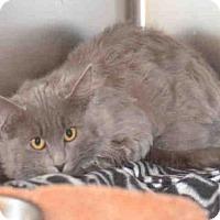 Adopt A Pet :: MADISON - Jackson, CA