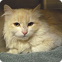 Adopt A Pet :: Eve - Wickenburg, AZ