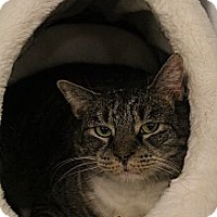 Adopt A Pet :: Sydney - Chesapeake, VA