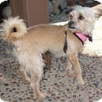 Adopt A Pet :: Cissy - Culver City, CA