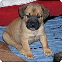 Adopt A Pet :: Alex - Minneola, FL