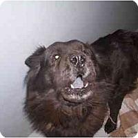 Adopt A Pet :: COURTESY Jet - Scottsdale, AZ