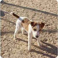 Adopt A Pet :: HARDY - Scottsdale, AZ