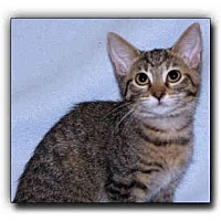 Adopt A Pet :: Ashley - Howell, MI
