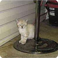 Adopt A Pet :: Forte - Owasso, OK