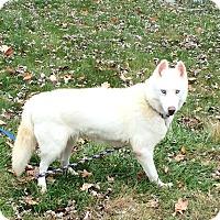 Adopt A Pet :: Bonnie - Zanesville, OH