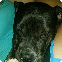Adopt A Pet :: Cassie - Villa Park, IL