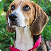 Adopt A Pet :: Will - Miami, FL