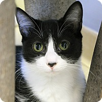 Adopt A Pet :: Cipriano - Chicago, IL