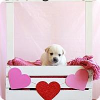Adopt A Pet :: Barry - Waldorf, MD
