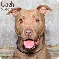 Adopt A Pet :: Cash - Troy, MI