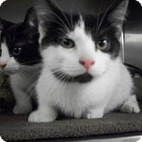 Adopt A Pet :: Apatchee *CL* - Independence, MO