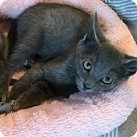 Adopt A Pet :: Reno - Mount Laurel, NJ