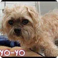 Adopt A Pet :: Yo-yo -  385 / 2016 - Maumelle, AR